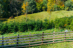 Weiland en boomkwekerij Royalty-vrije Stock Afbeeldingen