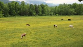 Weiland in Great Smoky Mountains NP stock videobeelden