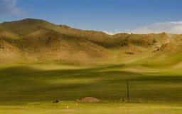 Weiland op het plateau Royalty-vrije Stock Afbeeldingen