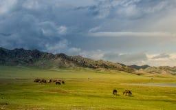 Weiland op het plateau, paard rond Stock Foto's