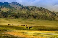 Weiland op het plateau, paard rond Royalty-vrije Stock Afbeeldingen