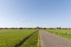 Weilanden op Schiermonnikoog; Meadows at Schiermonnikoog royalty free stock images
