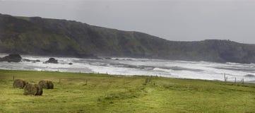 Weilanden van groen sappig gras met het Cantabrische Overzees en de klippen Asturias, Spanje royalty-vrije stock fotografie
