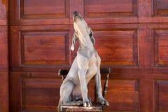 Weimaraner del cane Fotografie Stock