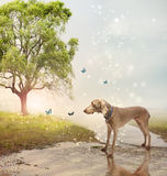 Dog and butterfies at a magical brook Royalty Free Stock Photos