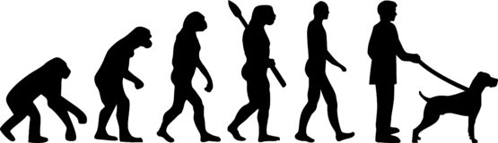 Weimaraner ewolucja royalty ilustracja