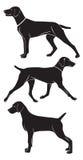 Weimaraner hund royaltyfri illustrationer