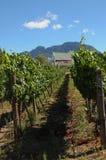 Wein-Bauernhof Lizenzfreies Stockbild