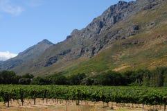 Wein-Bauernhof Lizenzfreies Stockfoto