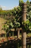 Wein-Bauernhof Stockfoto