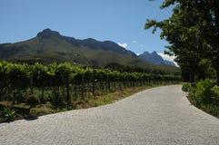 Wein-Bauernhof Stockbilder