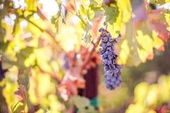 Wein bei der Aufwartung Lizenzfreie Stockfotos