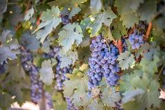 Wein bei der Aufwartung Stockfotografie