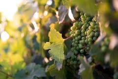 Wein bei der Aufwartung Lizenzfreies Stockbild
