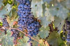 Wein bei der Aufwartung Stockfoto