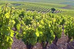 Wein-Berge in ländlichem Rioja, Spanien Lizenzfreie Stockfotos