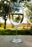 Wein draußen stockbilder