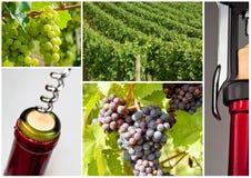 Wein-Flasche mit Korkenzieher stockfotografie