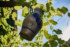 Wein-Krug, der zwischen Weinstöcken hängt Stockfoto