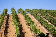Wein-Land Lizenzfreies Stockbild