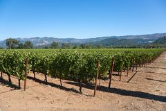 Wein-Land Stockbild