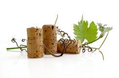 Wein-Probieren Lizenzfreie Stockfotos