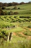 Wein-Spur Stockfoto