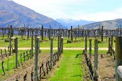Wein-Spur Queenstown, Neuseeland Lizenzfreies Stockfoto