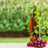 Wein, Traube und Weinberg Lizenzfreie Stockfotos