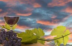 Wein, Traube und Weinstock bei Sonnenuntergang Lizenzfreie Stockfotografie