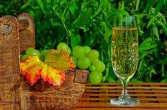 Wein und Trauben in einem Garten Lizenzfreies Stockfoto
