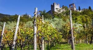 Weinanbau bei Castello di Avio Trento stockbild