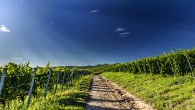Weinanbauende Landschaft Lizenzfreie Stockfotos