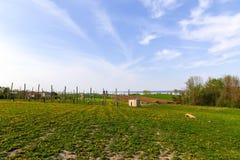 Weinanbaugebiet-Ansicht Lizenzfreie Stockbilder