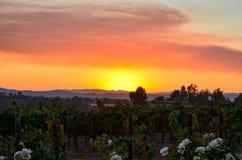 Weinanbaugebiet Temecula Süd-Kalifornien Stockfotografie