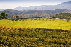Weinanbaugebiet, Temecula, Süd-Kalifornien Stockbild