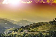 Weinbau auf den portugiesischen Hügeln Lizenzfreies Stockbild
