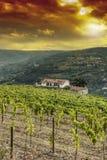 Weinbau auf den portugiesischen Hügeln Stockfotos