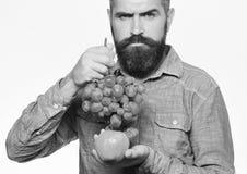 Weinbauer mit strengem Gesicht hält Trauben und rote Frucht Mann mit Bart hält Bündel von grünen Trauben und von Apfel Lizenzfreie Stockbilder