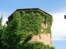 Weinberankter Ziegelstein-Turm lizenzfreie stockbilder