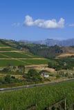 Weinberg auf dem Berg Stockbild