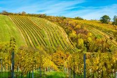 Weinberg auf einem Hügel im Herbst Stockfoto