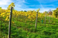 Weinberg auf einem Hügel im Herbst Lizenzfreies Stockbild