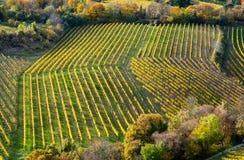Weinberg auf einem Hügel im Herbst Lizenzfreie Stockfotos