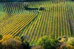 Weinberg auf einem Hügel im Herbst Lizenzfreie Stockfotografie