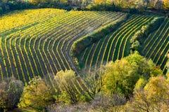 Weinberg auf einem Hügel im Herbst Lizenzfreie Stockbilder