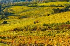 Weinberg auf einem Hügel im Herbst Lizenzfreies Stockfoto