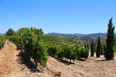 Weinberg auf einem Hügel in Priorat Spanien stockfotos