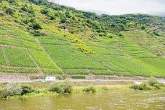 Weinberg auf grünen Hügeln entlang Mosel-Fluss Stockfotos