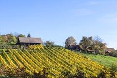 Weinberg auf Schilcher-Weinweg mit einigen traditionellen alten Hütten Lizenzfreie Stockfotografie